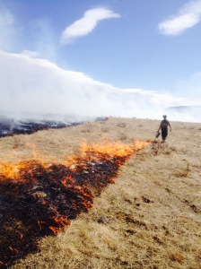 Troy doing a prescribed fire early this spring