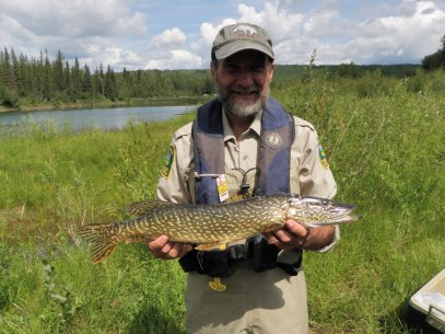 Northern pike captured at pond.