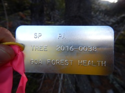 Each rust resistant tree gets a permanent tag with unique ID