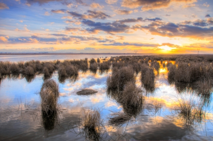 Wetland Sunset